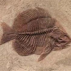 认识人和鱼的AI,能识别美人鱼吗?阿里CVPR论文试用因果推理方法解答